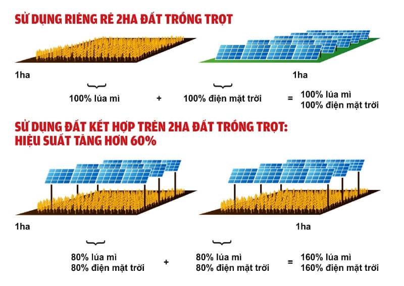trang trại kết hợp điện mặt trời